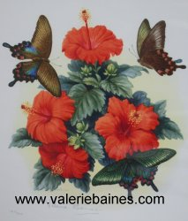 Tropical Butterflies with Hibiscus